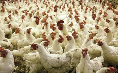 Why You Need a Tractor on Your Chicken Farm